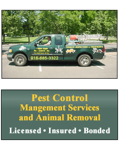 Pest Control and Management Services Elk Grove / Animal Removal Sacramento